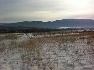 WestWhitehill-landscape